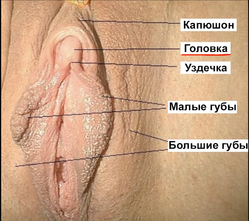 Названия различных разновидностей секса